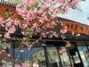 洋食屋 桜亭