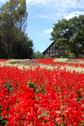 岡山農業公園ドイツの森